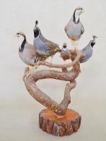 Californian-quail, Lophortyx-californica, Chukar-partridge, Alectoris-chukar, King-Quail,  Coturnix-chinensis