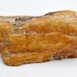 Petrified-Wood,