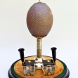 Mounted-Emu-Egg, Australiana,