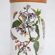 Portmeirion-Ceramic-Canister, The-botanic-garden, solanum-dulcamara, woody-nightshade